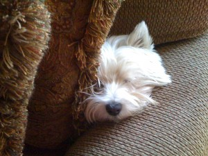Rocky snoozing
