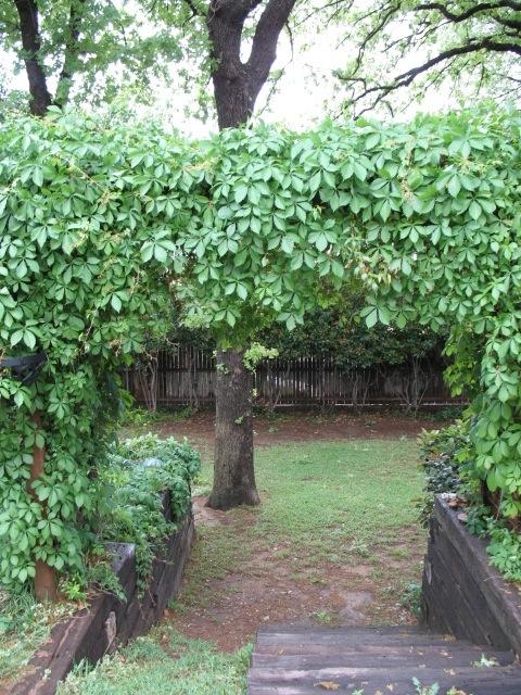 ivy-arbor